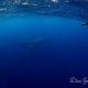 沖縄本島ホエールスイム🐋✨