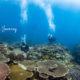 古宇利島 体験ダイビング