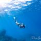 チービシ諸島でスキンダイビングトレーニング
